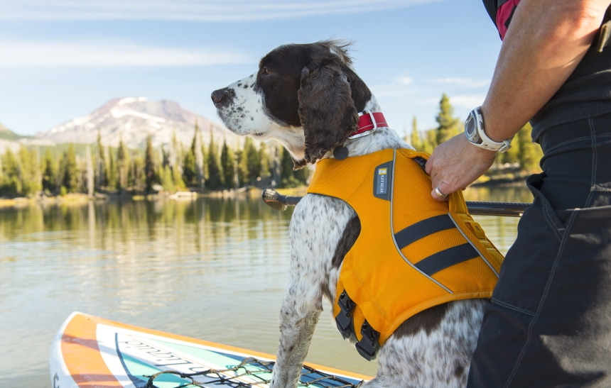 10 Best Dog Life Jackets – Provide Your Pet's Safety!